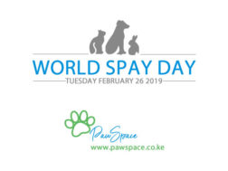 World Spay Day 2019