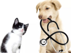 choosing a vet